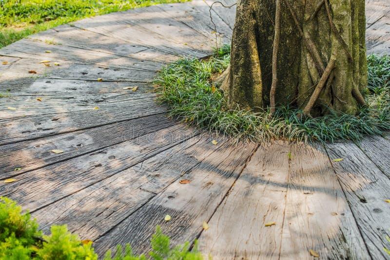 装饰小径和草在庭院里 免版税库存照片