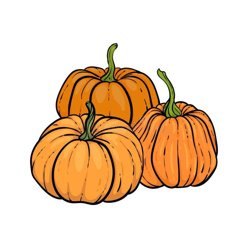 装饰性橙色南瓜 手绘草图矢量图秋图 感恩节,万圣节假日背景 收获 库存例证