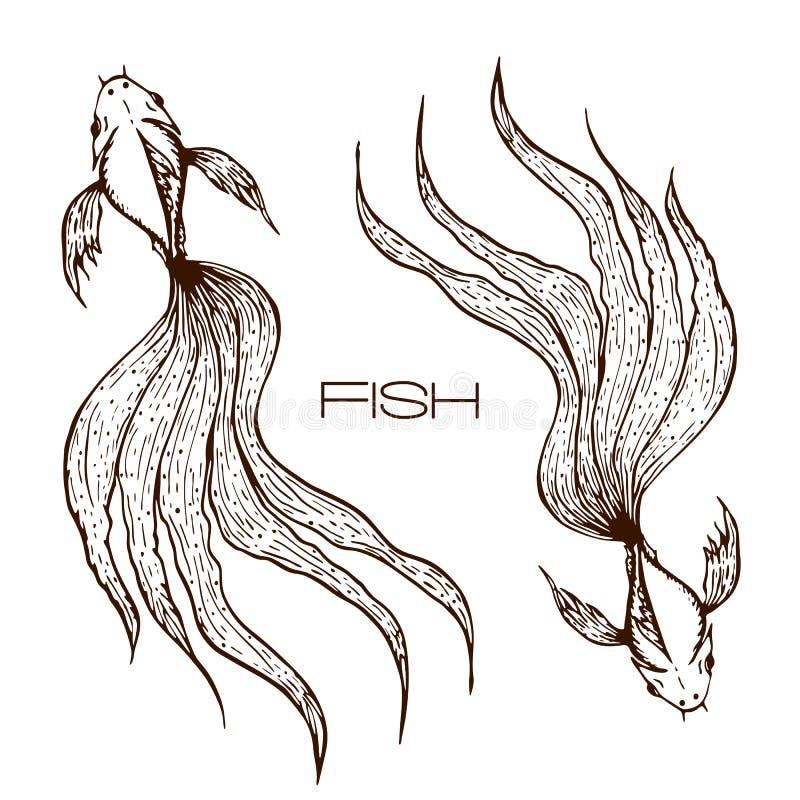 装饰手拉的koi或betta或者金鱼例证 速写的线鱼图表 两条长的波浪被盯梢的鱼概念  库存例证
