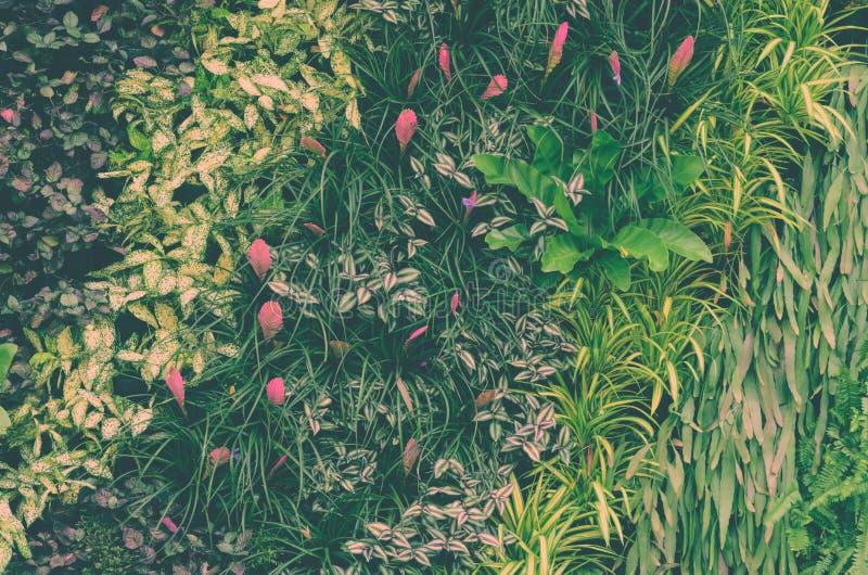 装饰有热带绿色叶子的叶子垂直的庭院墙壁 免版税图库摄影