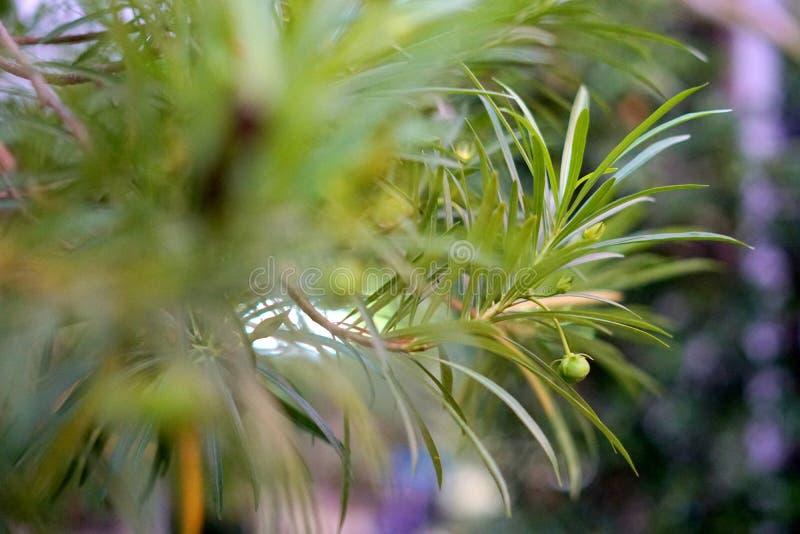 装饰树和花在庭院里 免版税图库摄影