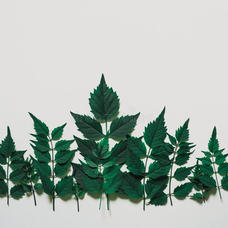 装饰森林treeline由绿色制成在明亮的backgr离开 免版税库存照片