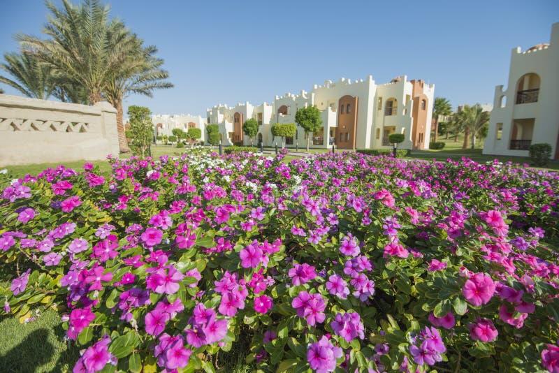 装饰玫瑰色荔枝螺开花植物在一个规则式园林里 免版税图库摄影