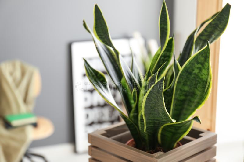 装饰百合科植物植物在屋子,特写镜头里 库存图片