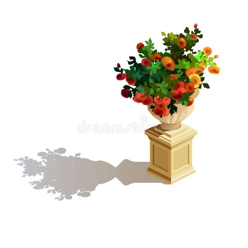装饰的元素 玫瑰灌木在花盆开花 免版税库存照片