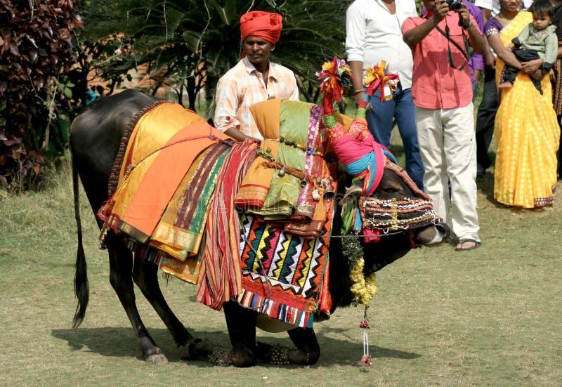 装饰的公牛pongal印度节日 免版税图库摄影