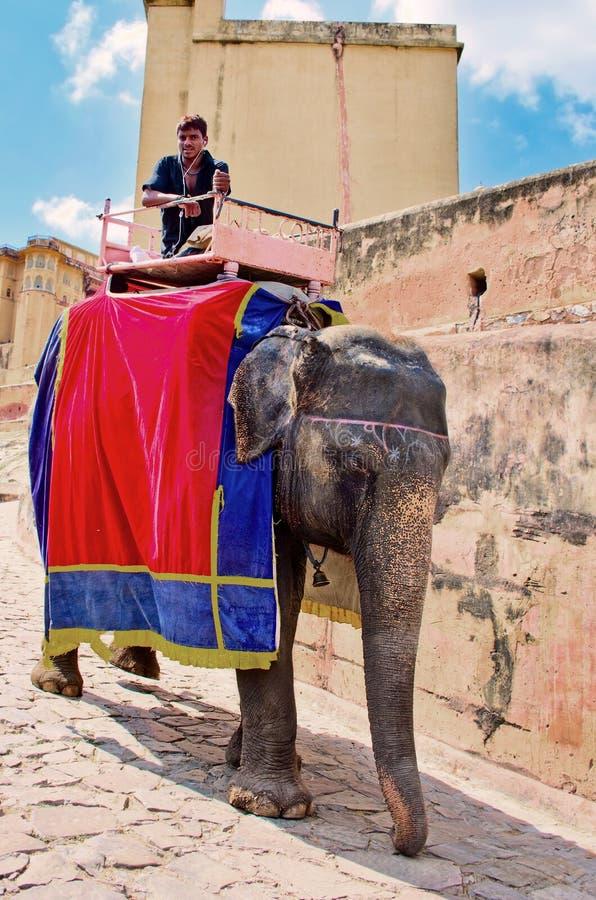 装饰的大象在斋浦尔, Rajast运载在琥珀色的堡垒的司机 免版税库存照片