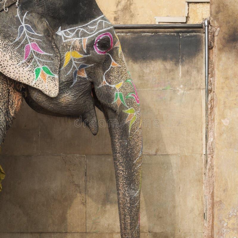 装饰的大象在琥珀色的堡垒的Jaleb Chowk在斋浦尔, Indi 免版税图库摄影
