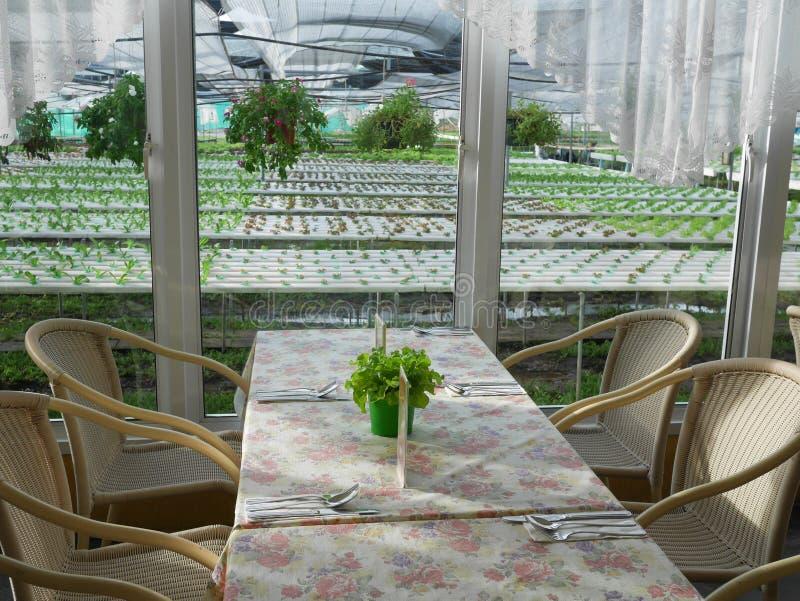 装饰的室和桌吃葡萄酒样式的 免版税库存图片