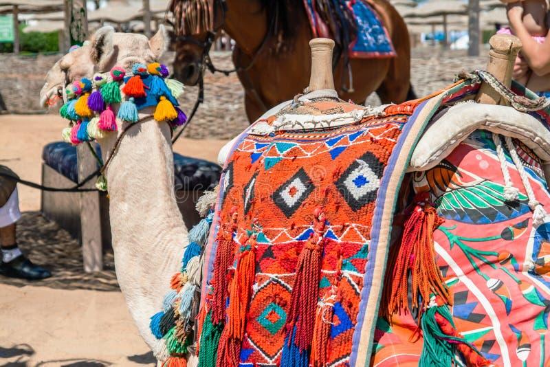 装饰的骆驼在埃及 库存图片