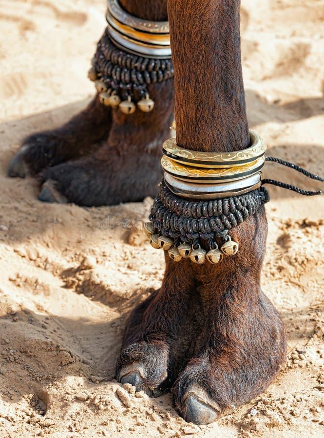 装饰的骆驼脚 免版税库存照片