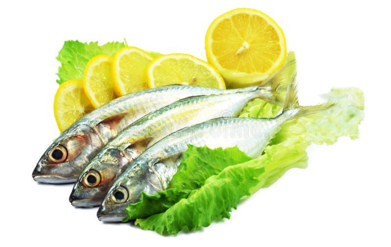 装饰的鱼柠檬沙拉 免版税库存图片