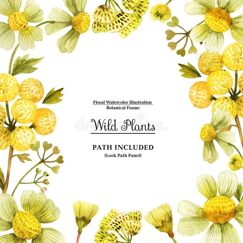 装饰的黄色野生植物方形的框架 皇族释放例证