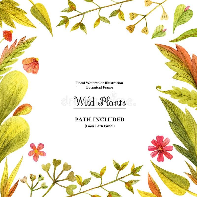 装饰的黄色野生植物方形的框架 向量例证