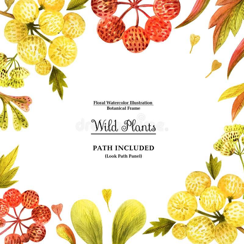 装饰的黄色野生植物方形的框架 库存例证