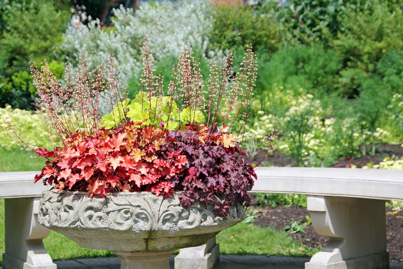 装饰盆的植物 库存照片