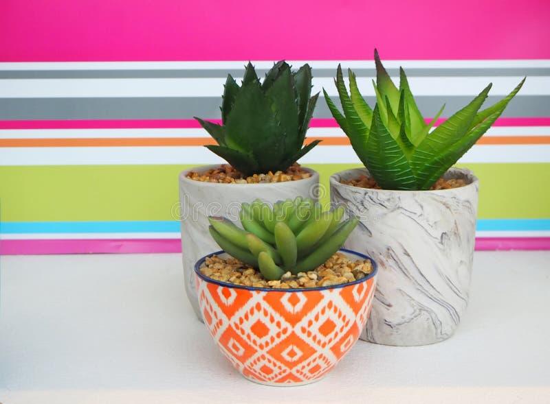 装饰罐的多汁植物在白色桌上 在背景的镶边五颜六色的墙壁 库存照片
