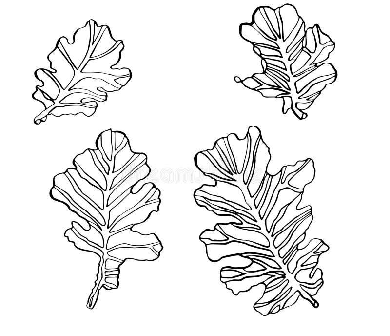 装饰集合传染媒介墨水图画橡木离开与斑斑 库存例证