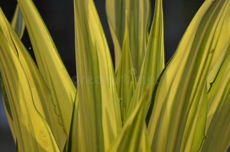 装饰黄绿植物刀片  库存图片