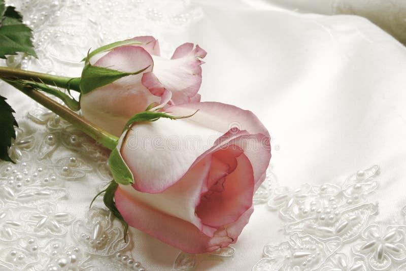 褂子玫瑰 免版税库存图片