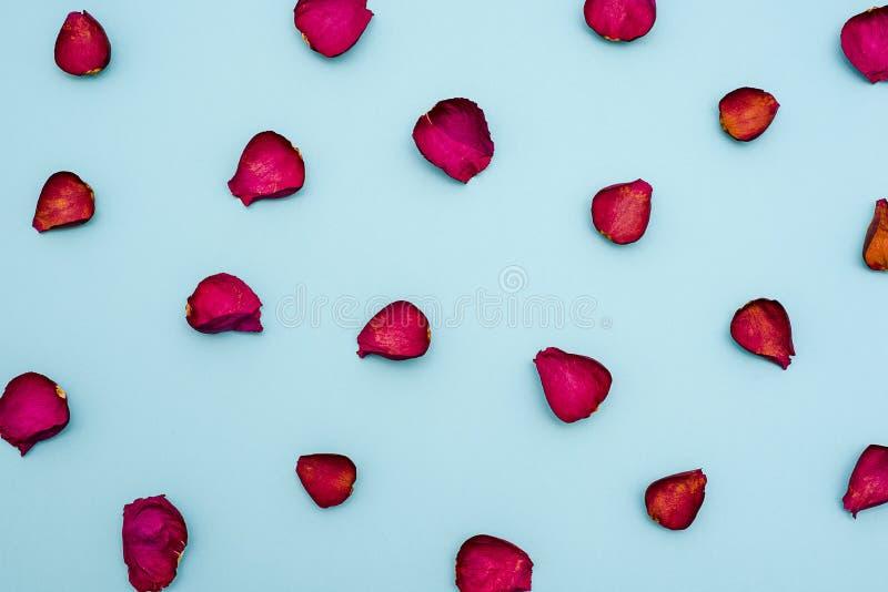 褐红的玫瑰花瓣背景在蓝色背景的 顶视图 问候的空白,贺卡 免版税库存照片