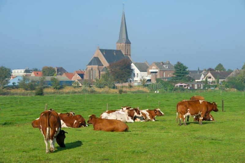 褐色威胁空白荷兰语的草甸 免版税库存照片