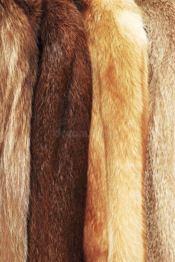 Download 褐色涂上毛皮 库存照片. 图片 包括有 感激的, 背包, 长毛, 蓬松, 头发, 敌意, 皮肤, 自然, 外套 - 22350116