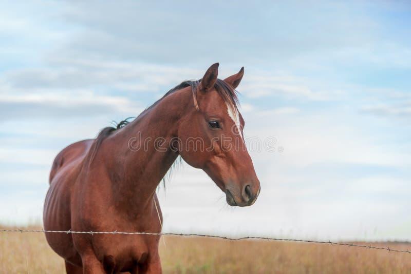 黑褐色皮包骨头的马