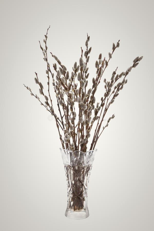 褪色柳的分支与花蕾的在花瓶 库存图片