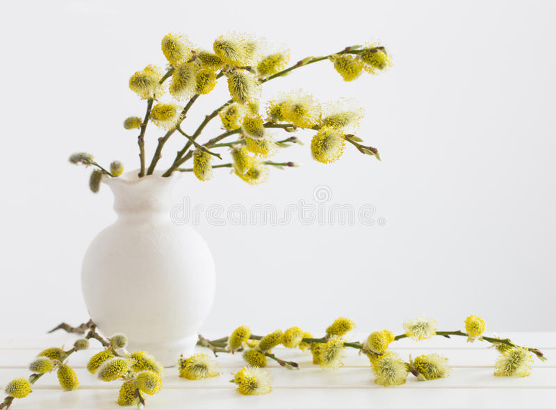 褪色柳的分支与花蕾的 库存照片