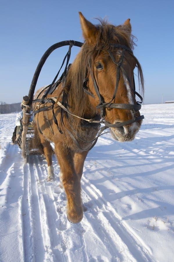 西伯利亚冬天 免版税库存照片