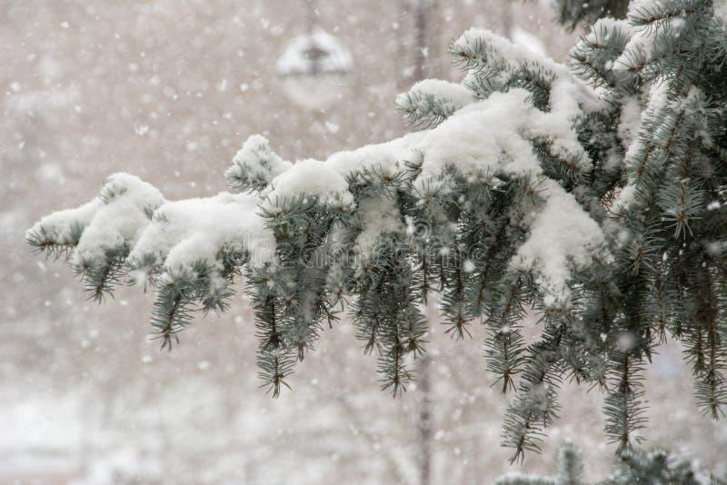 西伯利亚冬天 图库摄影