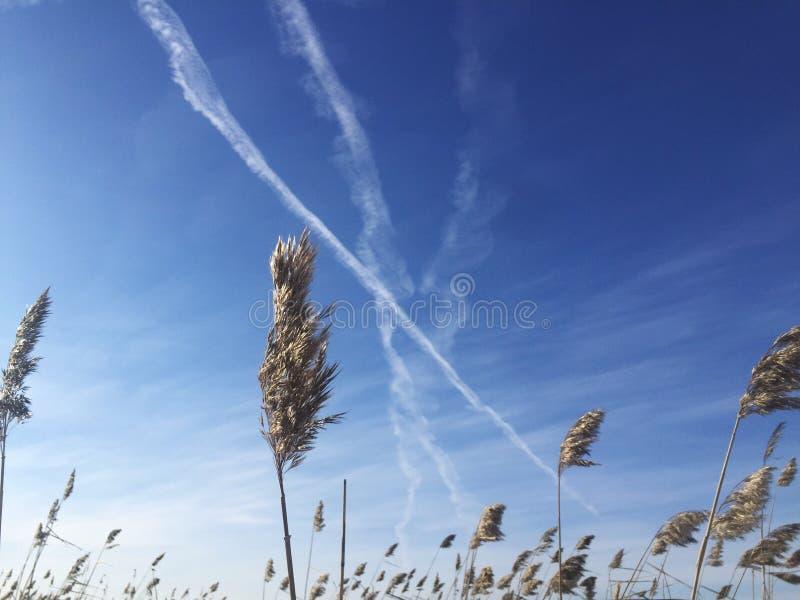 西伯利亚天空自然云彩 免版税库存照片