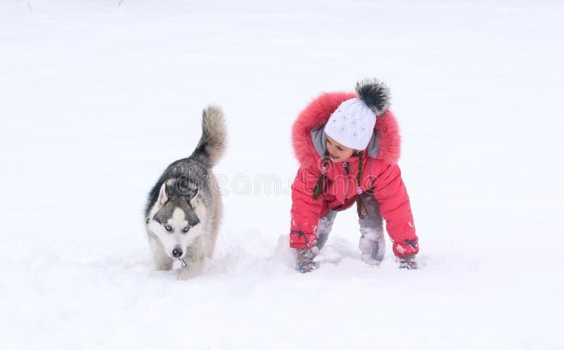 西伯利亚爱斯基摩人狗和小女孩赛跑 库存照片