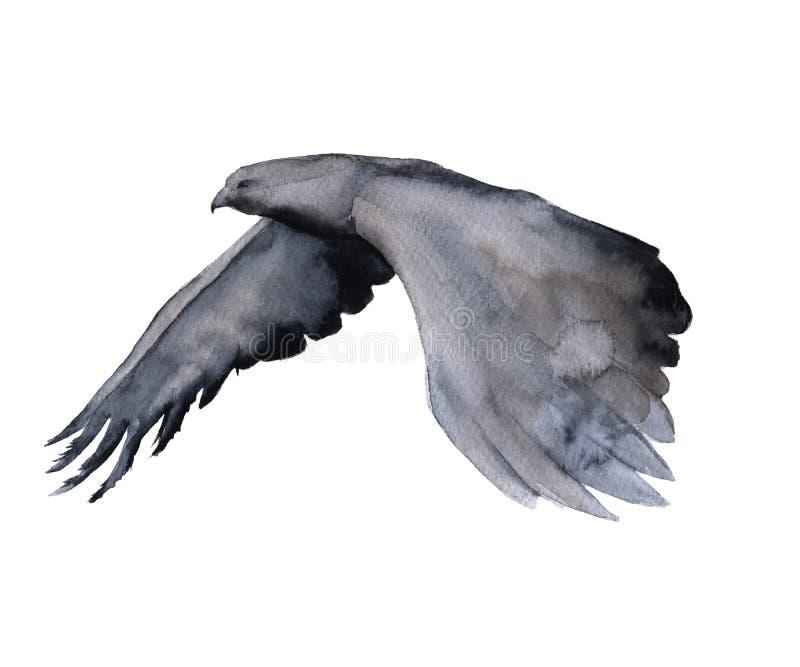 西伯利亚 在飞行中老鹰 背景查出的白色 向量例证