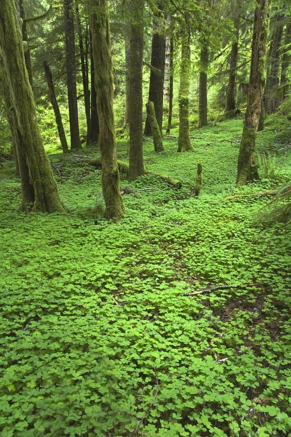 西北部楼层森林太平洋 免版税库存照片