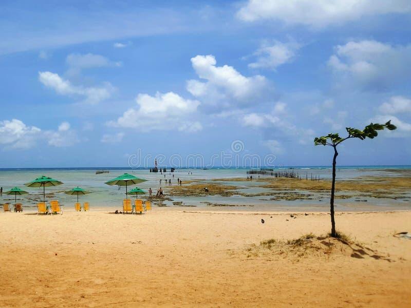 巴西天堂海滩 免版税库存照片