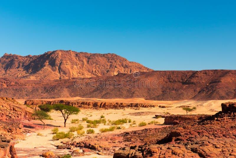 西奈沙漠风景 免版税库存图片