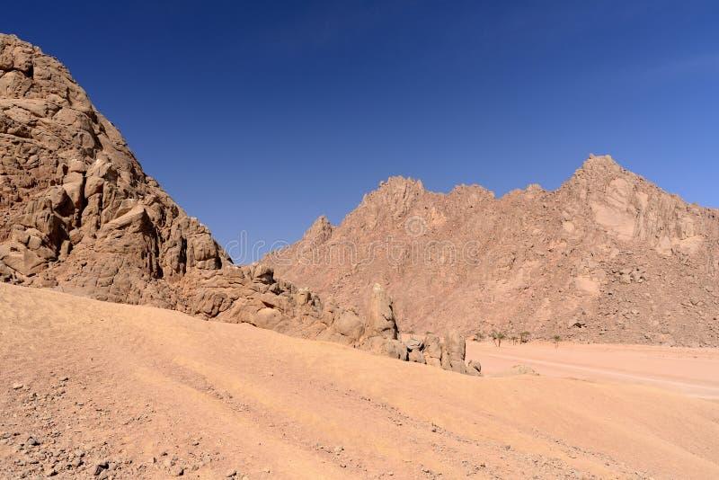 西奈沙漠 免版税库存图片