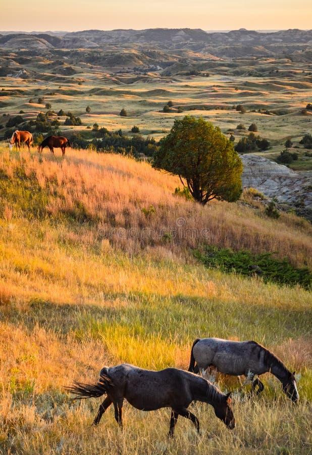 西奥多・罗斯福国家公园, 免版税图库摄影