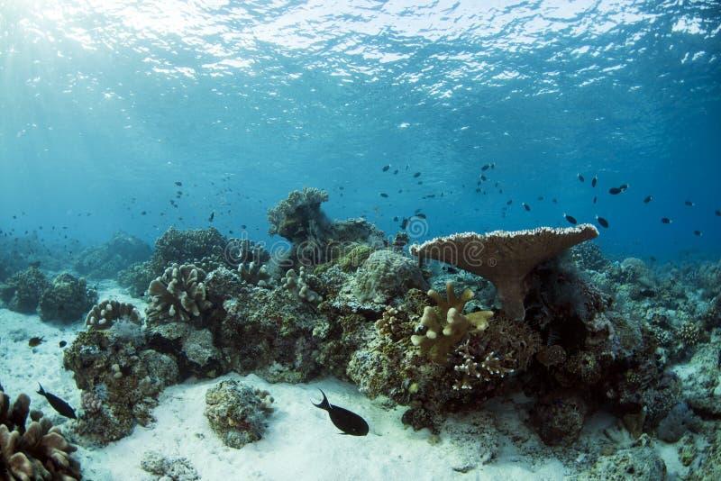 西巴丹岛海岛水下的生活  库存图片
