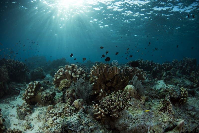 西巴丹岛海岛水下的生活  免版税库存图片