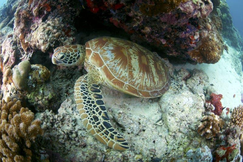 西巴丹岛海岛-沙巴 库存图片