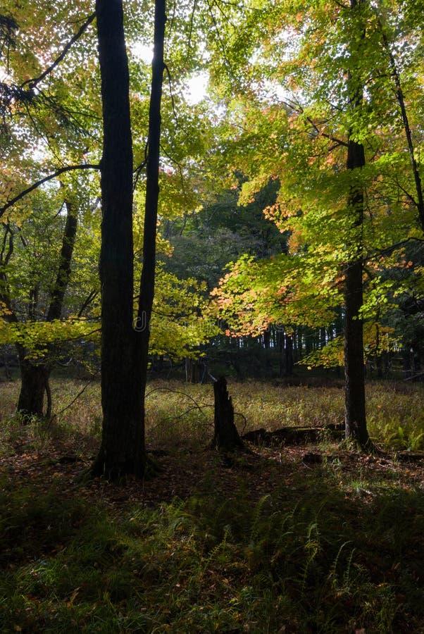西弗吉尼亚州卡南谷州立公园秋晨 免版税库存图片