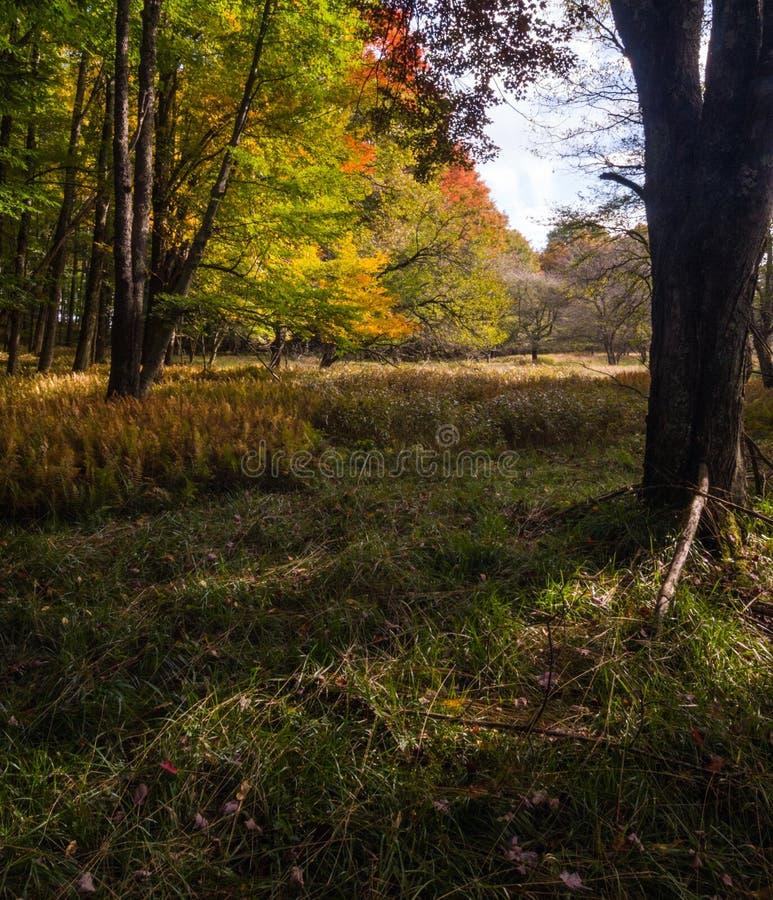 西弗吉尼亚州卡南谷州立公园秋晨 免版税库存照片