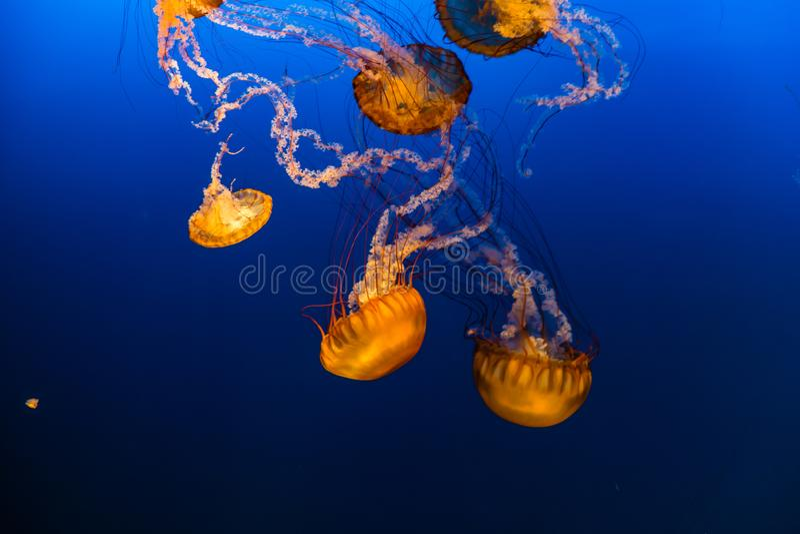 西海岸海荨麻在奥马哈亨利杜尔利动物园里 图库摄影
