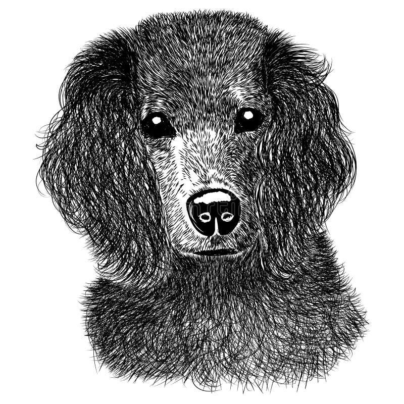 西班牙猎狗剪影 免版税库存图片