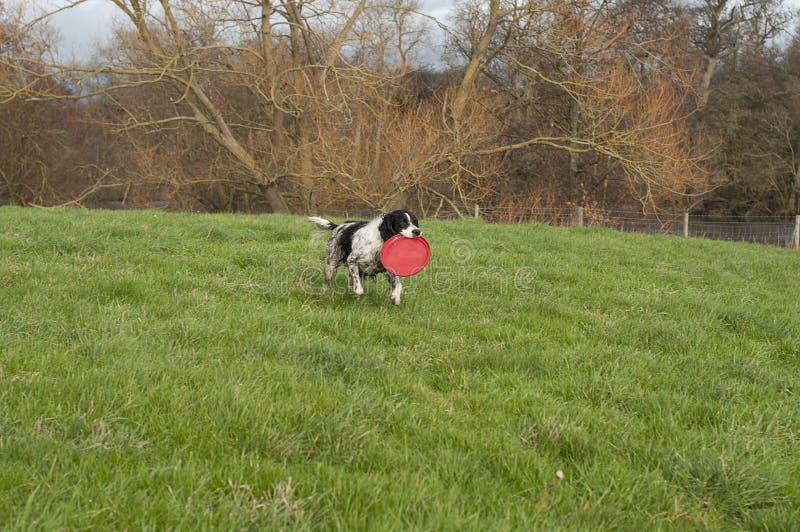 西班牙猎狗蹦跳的人玩具 免版税库存照片