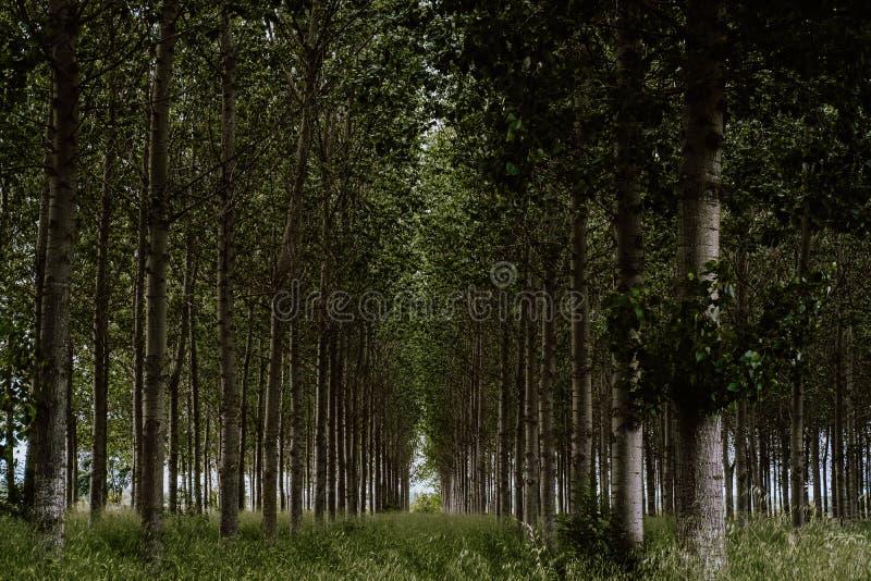 西班牙的北部的森林 免版税库存照片