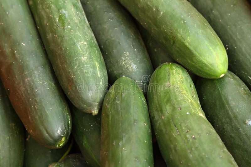 西班牙语的黄瓜 免版税库存图片